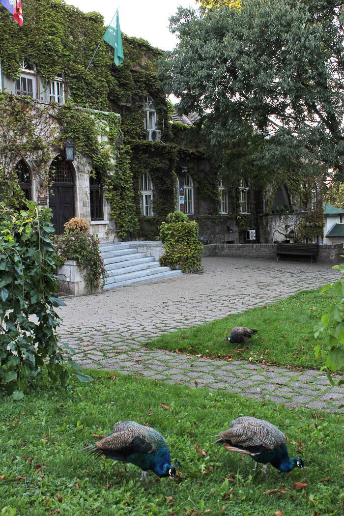 """Zgrada JKP """"Zelenilo Beograd"""" u okviru ZOO vrta"""